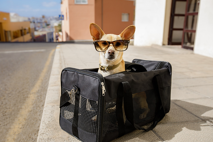 Top Tips for Taking Furry Friends Along for the Ride