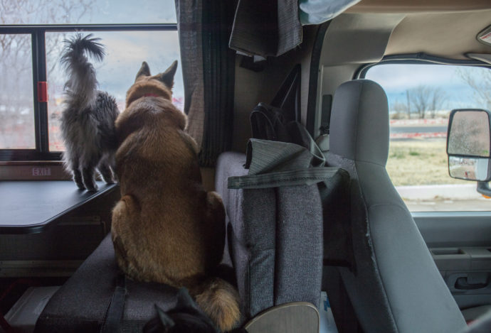 Tips for Taking an RV Trip with Pets
