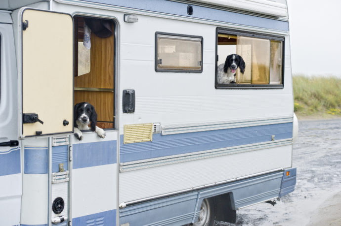 When Fido Goes Camping: 7 Tips for RVing with Dogs