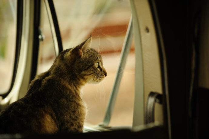 Choosing the Best Furry Friend for Life in an RV